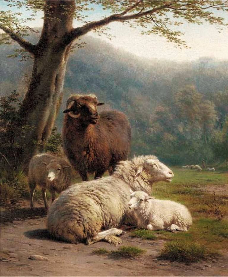 Lebret-Sheep-in-a-meadow