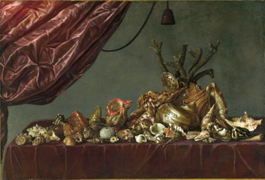 Susenier-Stillife-with-shells