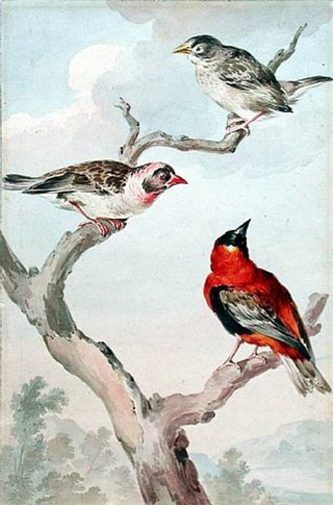 Schouman-Aert-Three-birds-in-a-tree2